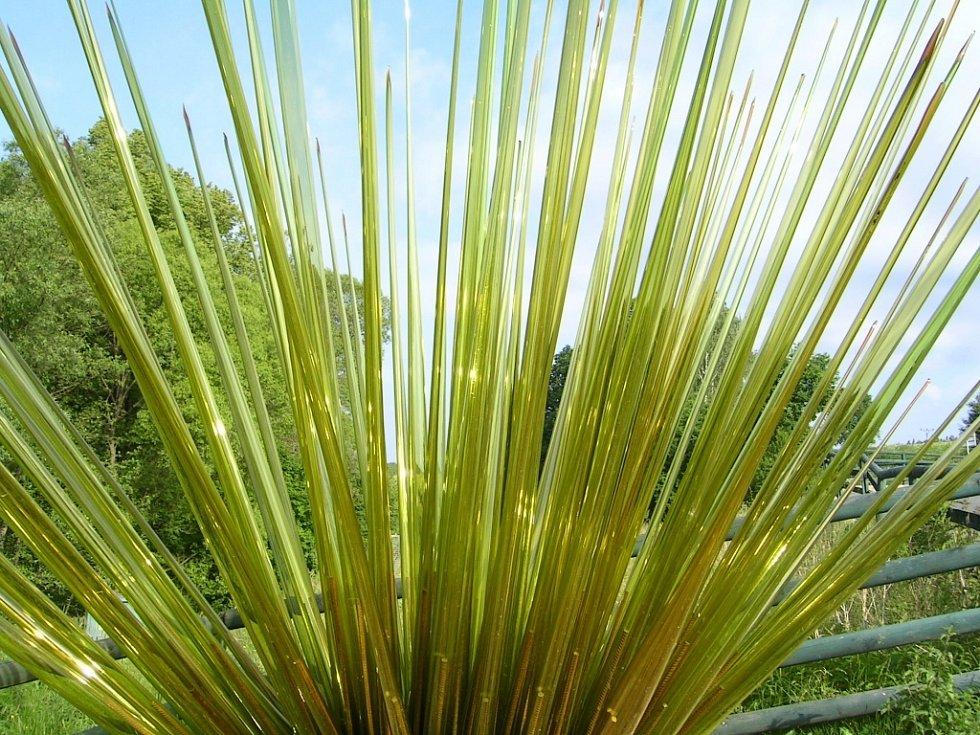 Trs trávy lze obdivovat nedaleko obce Lindava.
