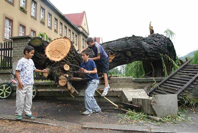 Mohutný strom nevydržel nápor větru v Trmicích