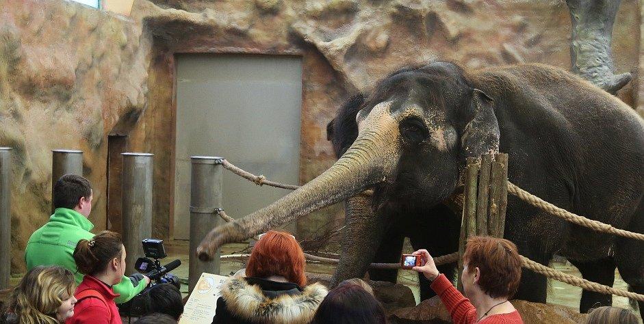 Slonice Kala.