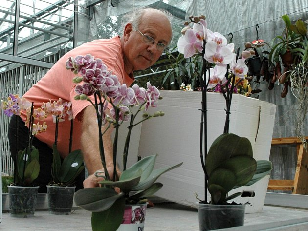Výstava Tropické orchideje je k vidění v botanickém parku Přírodovědecké fakulty.