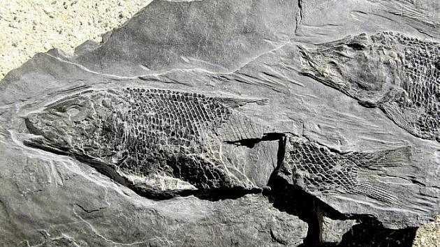 Břidlice, fosilie