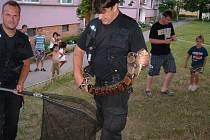 Ústecké strážníky volají lidé během služby k odchytu desítek zvířat řady různých živočišných druhů.
