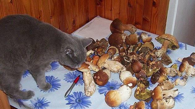 Odborného posouzení houbařské kořisti se zúčastnila také všudypřítomná čtyřnohá Bára.