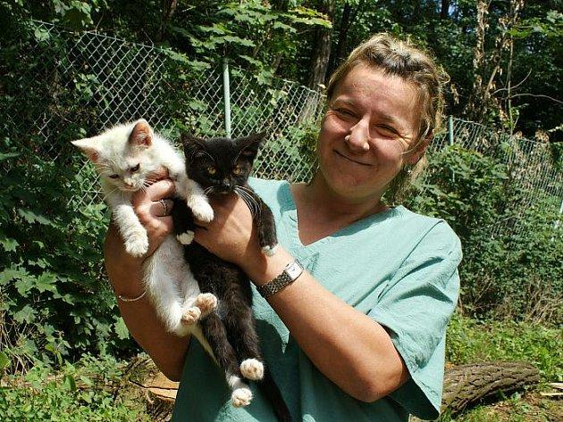 Jaroslava Dobrovolná, šéfová ústeckého útulku pro zvířata v nouzi, ukazuje dvě z dvaceti pěti opuštěných koťat, která tu našla azyl.