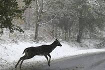 Předpovědi meteorologů tentokráte vyšly a sníh pokryl Ústecký kraj.