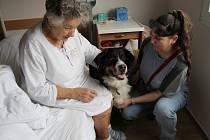Pacientka Anna Džurbanová návštěvu canisterapeutky Lenky Macháčkové přivítala. Možnost potěšit se s přítulnou fenkou Jessy jí udělala radost.A