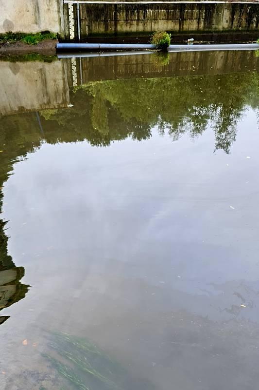 Řeka Bílina za Stadicemi před jezem