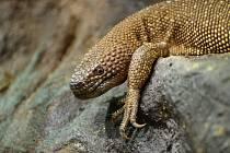 Korovec mexický má v ústecké zoo novou expozici