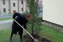 Oslavy výročí začaly ve čtvrtek zasazením památečního stromu v univerzitním kampusu.