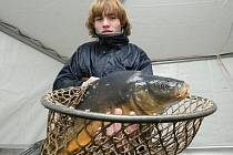 Prodejce ryb Jan Kučera prodává kapry u mobchodního centra Tesko.