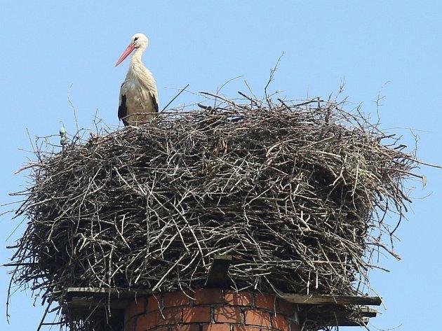 Nejspíše jedinou čapí rodinu na Ústecku mohou letos v létě lidé spatřit na komíně v Chabařovicích.