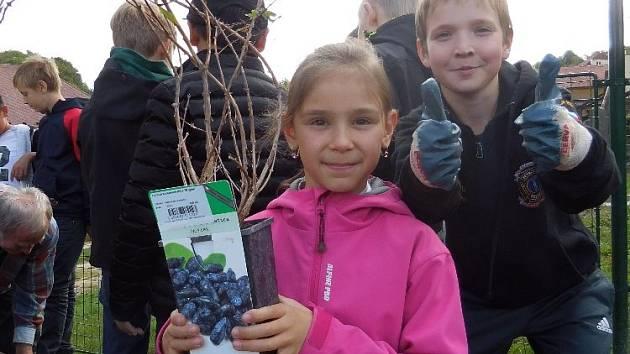 Petrovičtí žáci oslavili Den míru vysazením borůvek