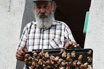 Arnošt Olah sbírá bednu šneků celý den. Kilogram prodává za 11 korun.