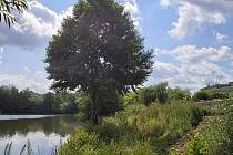 Všude plevel a sem tam odpad. Kdysi velmi živé břehy Habrovického rybníku jsou dnes bez návštěvníků