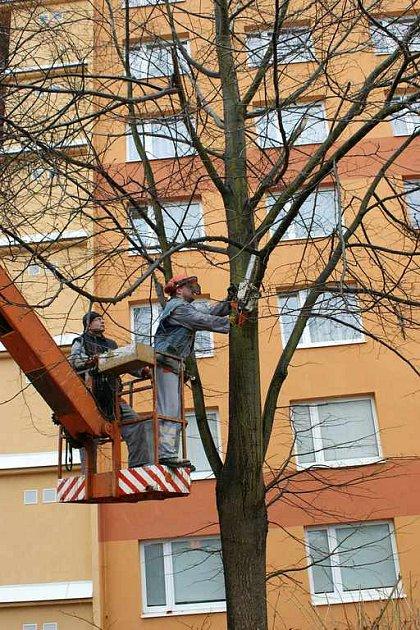 Jarní prořezávání stromů v Ústí nad Labem - Skřivánek.