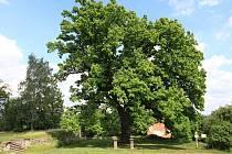 Který ze stromů finalistů se vám líbí?