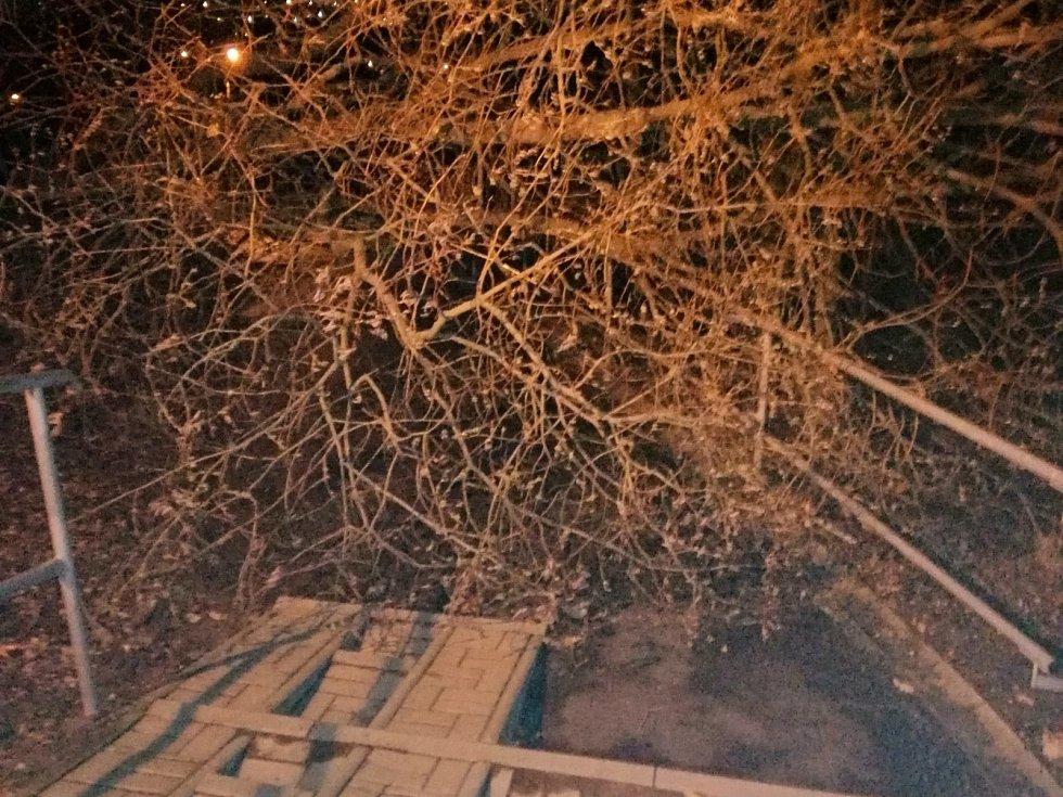 Vítr srazil k zemi mnoho stromů. Tento padl na cestu v ústeckém Střekově