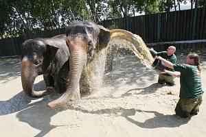 Zlaté časy, kdy ústecké slonice při letním koupání v roce 2011 přitahovaly zaslouženou pozornost Ústečanů, skončily. Po utracení Kaly strádala Delhi steskem a musí odejít do Německa.