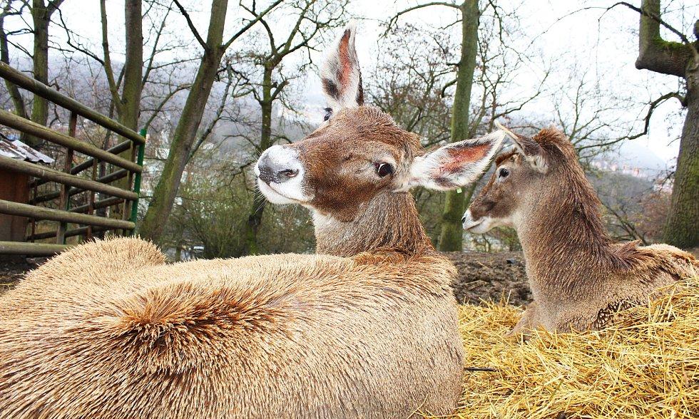 První den po znovuotevření zoologických zahrad nepřálo počasí, přesto si fanoušci do zahrady v Ústí nad Labem cestu našli.
