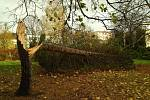 Vítr vyvracel stromy na Severní Terase-