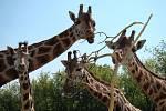 Zoologická zahrada v Ústí nad Labem, ilustrační foto.