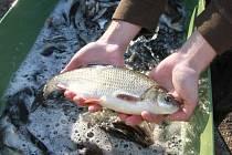 Řeku Bílinu obohatí šest a půl tisíce ryb.