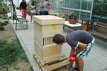 Účastníci letní školy si na katedře biologie prohlížejí úl se skleněnými průhledy. Zatím v něm ale včely nejsou, počkat musí do příštího léta.