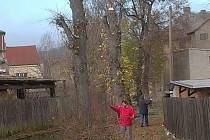 Muž s pomocníky ve staré aleji poškodil čtyři stromy. Kdysi rostlé lípy nyní připomínají spíš telegrafické sloupy.