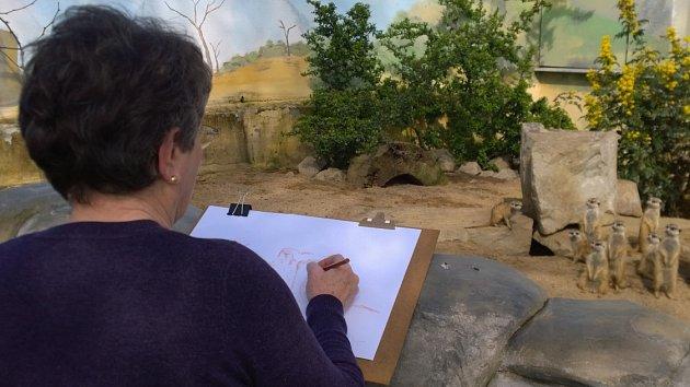 Univerzitní seniorky malují zvířata vústecké zoologické zahradě.