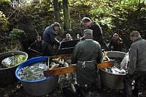 Výlov rybníka v Chabařovicích
