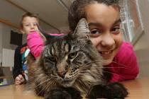 Děti ve škole Pod Parkem si terapie s kočkami, psy a dalšími zvířaty velmi oblíbily.
