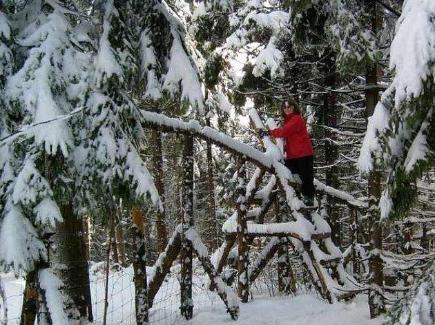 Když se o možnosti adoptovat část pralesa u Liberce Dáša Svobodová dozvěděla, nejprve se jela na místo podívat.