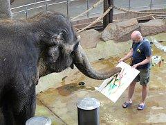 Slonice v ústecké zoologické zahradě malují obrazy. Na snímku Delhi s chovatelem Janem Javůrkem.