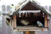Ilustrační snímek. Ptáci u krmítka