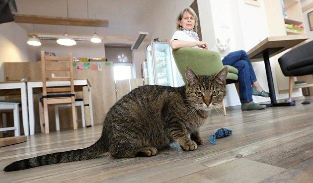 První kočičí kavárna vÚstí a Marta Chrudimská