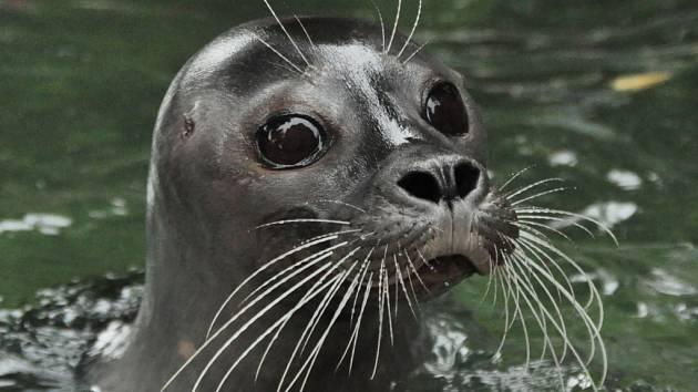 Ústecká zoologická zahrada se v současné době pokouší sehnat nového samce.