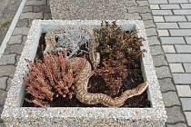Obyvatele Velkého Března vyděsil nález hada. Byl mrtvý