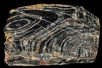 Stromatolit z Kokšína.