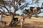 """""""Viděli jsme kozy na arganových stromech. Krásný zážitek,"""" napsala k fotce z dovolené u Agadiru v Maroku Anna Stieranková ze Štětí."""