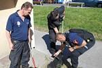 Strážníci odchytli kunu, která uvízla v kanálu