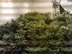 Pěstírna marihuany v rodinném domku v Řehlovicích.