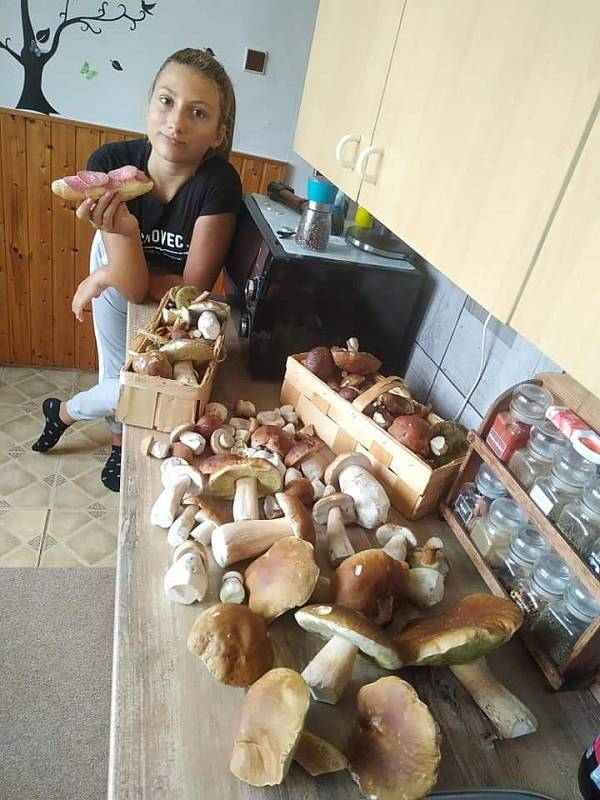Pěkné snímky z houbaření v Krušných horách zaslala do redakce čtenářka Veronika