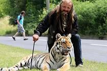 Tygr se procházel Ústím