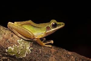 Café Nobel představí v teplické hvězdárně tvory tropického deštného pralesa.