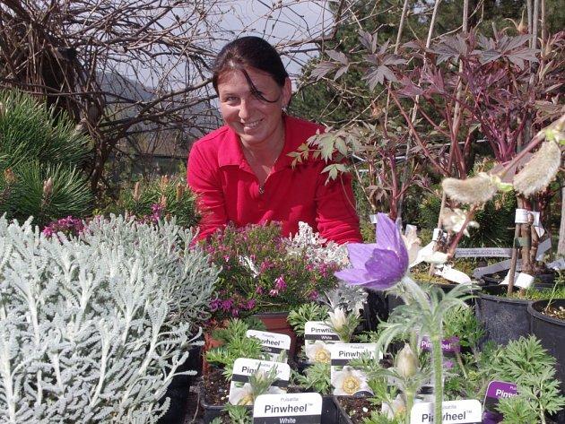 Čerstvé bylinky nabízejí i v Zahradnictví pod hradem Střekov. V sortimentu mají klasické druhy, ale i ty netradiční. Cena se pohybuje nejčastěji od dvaceti do osmdesáti korun.