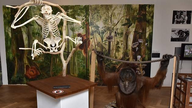 Miláček Ústečanů se se vrátil. Ňuňák má domov v muzeu