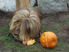 Strašidelná zoo pobavila.