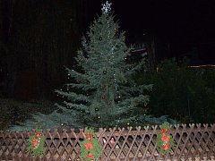 Vánoční stromek v areálu ústecké zoo.