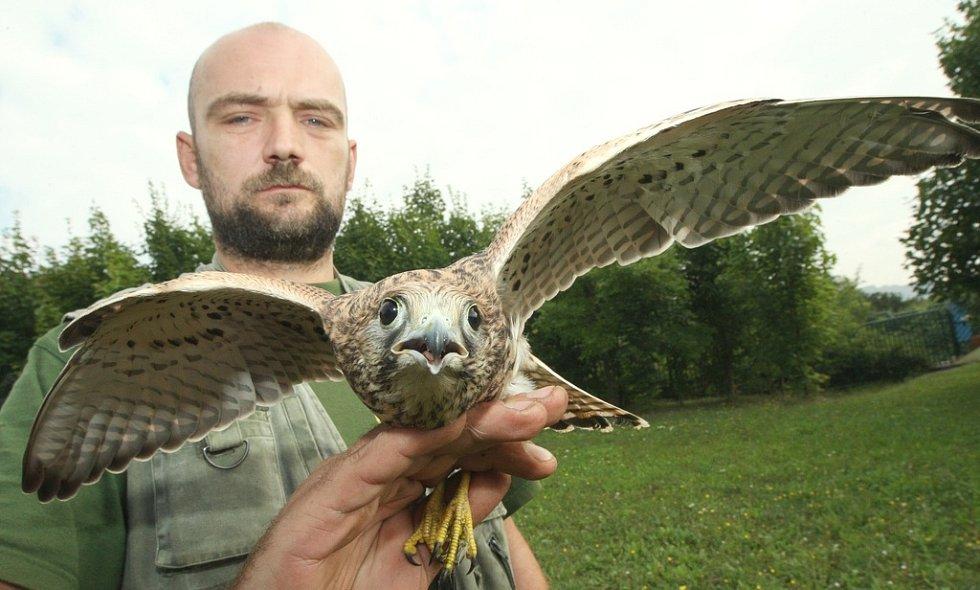 Ústecká zoo vypustila na svobodu několik zachráněných ptáků