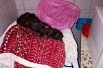 Celkem 16 mrtvých a 22 živých koček našli policisté zavřené vbytě vZolově ulici.